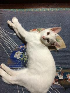 ベッドの上で横になっている猫の写真・画像素材[870007]