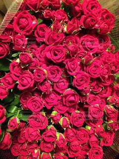 赤いバラいっぱいの写真・画像素材[870180]