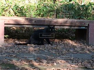 ベンチの下、ねこの写真・画像素材[870182]