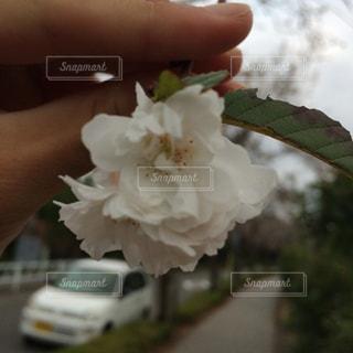 近くに花を持っている手のアップの写真・画像素材[870185]
