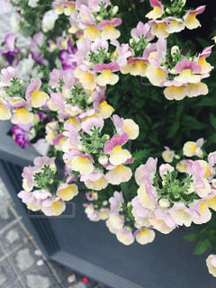 花のある街並み風景の写真・画像素材[481446]