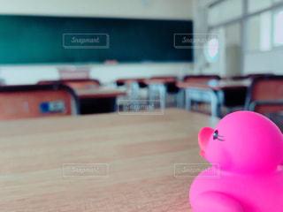 アヒルと教室の写真・画像素材[870626]