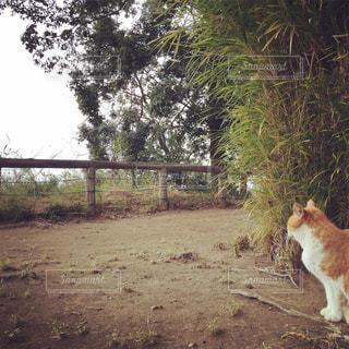 佇む猫の写真・画像素材[870989]