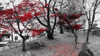 紅葉 - No.870833