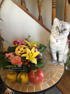 テーブルの上に座って猫の写真・画像素材[871032]