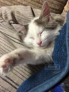 毛布の上に横になっている猫の写真・画像素材[871046]