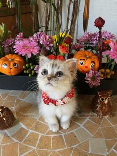タイル張りの床の上に座って猫の写真・画像素材[871049]
