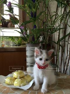 テーブルの上に座って猫の写真・画像素材[871056]