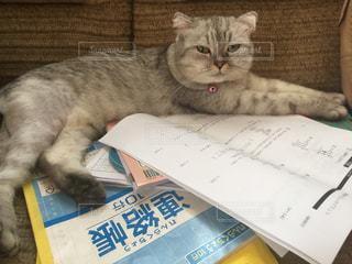 宿題の上に横たわる猫の写真・画像素材[886084]