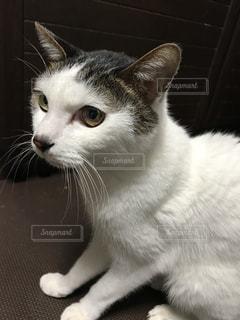近くに猫のアップの写真・画像素材[882878]