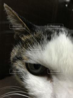 近くの白い背景の上に横たわる猫の写真・画像素材[882882]