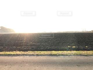 冬の畑の写真・画像素材[906592]