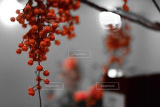 実りの秋の写真・画像素材[872431]