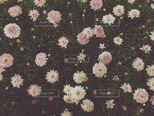 花と緑の写真・画像素材[872441]