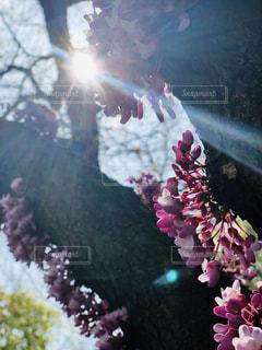 花のクローズアップの写真・画像素材[2127110]