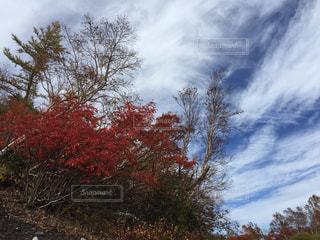 富士山の紅葉の写真・画像素材[888844]
