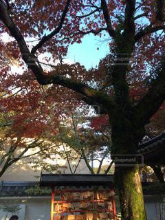 大きな木 - No.894565