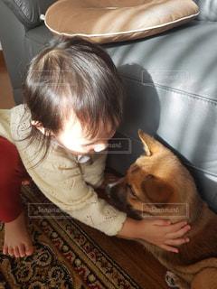 Good boyの写真・画像素材[961962]