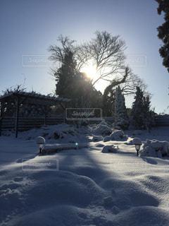 雪の朝の写真・画像素材[1008699]