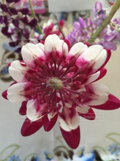 近くの花のアップの写真・画像素材[1112154]