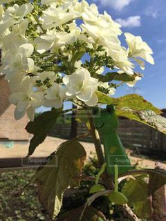 近くの花のアップの写真・画像素材[1215642]
