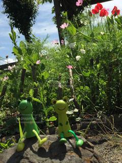 庭園の緑の植物の女神の写真・画像素材[1215649]