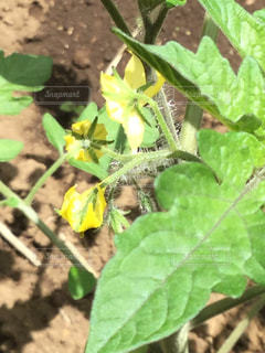 近くの緑の植物をの写真・画像素材[1223078]