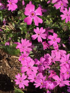 近くに紫の花のアップの写真・画像素材[1238394]