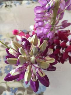 近くの花のアップの写真・画像素材[1245198]