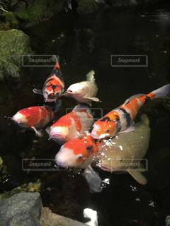 水の中の魚の群れの写真・画像素材[1245200]