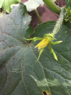 近くの植物のアップの写真・画像素材[1260307]