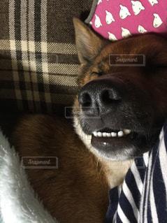 近くに犬のアップの写真・画像素材[1629502]