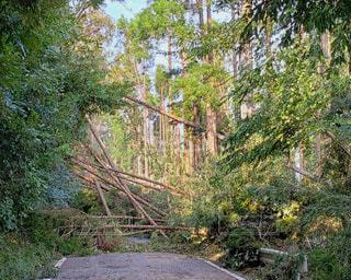 倒れた森の木の写真・画像素材[2435529]