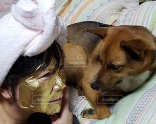 ベッドの上の人と犬の写真・画像素材[2855281]