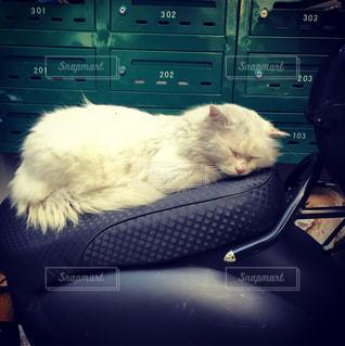 寝る猫の写真・画像素材[872766]