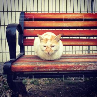 ベンチに座ってオレンジと白猫の写真・画像素材[872768]