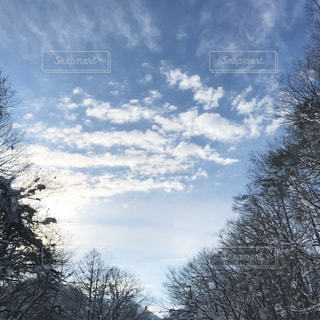 木々と曇り空の写真・画像素材[872921]