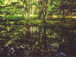水面に映る森林の写真・画像素材[877448]