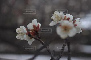 アップの写真・画像素材[1008753]