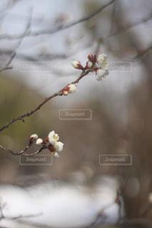 枝の写真・画像素材[1008756]