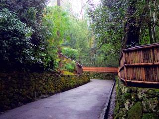 橋の近くの木製のベンチの写真・画像素材[879260]