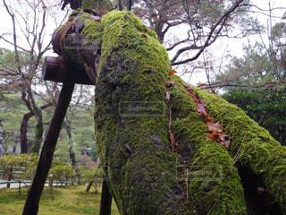 森の大きな木の写真・画像素材[879262]