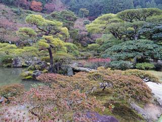 山の中腹に木と岩の多い川の写真・画像素材[879265]