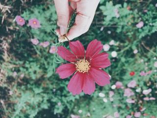 花を持っている手の写真・画像素材[983181]