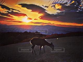 夕暮れの鹿 - No.874705