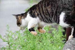 躍動感ある猫の写真・画像素材[876684]