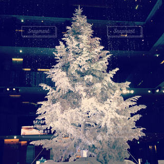 ホワイトクリスマスツリーの写真・画像素材[877077]