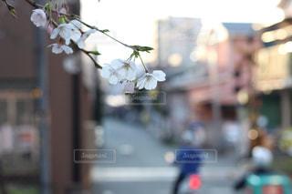 近くの花のアップの写真・画像素材[875743]