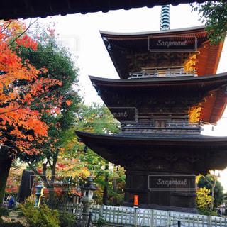 夕日にあたる豪徳寺三重塔と紅葉の写真・画像素材[1044154]