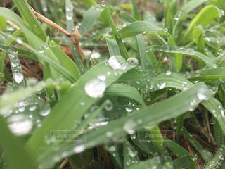 雨の後の雑草 - No.875991